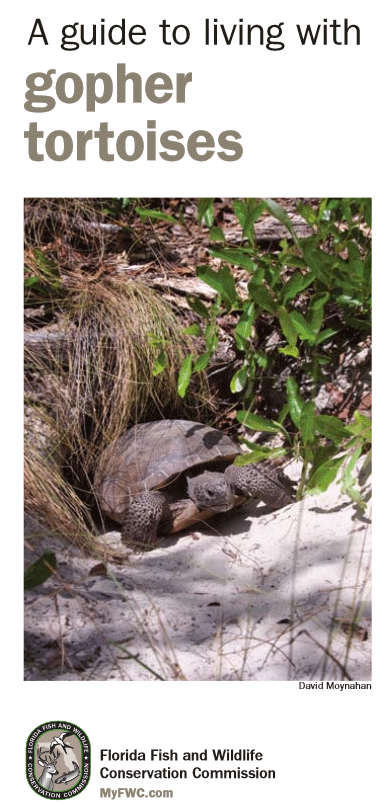 Living with Gopher Tortoises