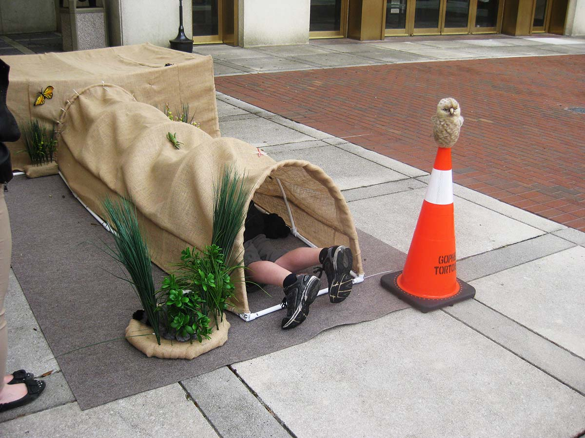 interactive burrow
